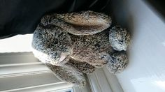 Found on 04/07/2015 @ Basford, Nottingham . Found this little guy on the junction of Arnold road and Hucknall Road in Basford. I'm not sure how long he has been outside but he's been taken in and given a good spa treatment. He's current... Visit: https://whiteboomerang.com/lostteddy/msg/90unkp (Posted by Zoe on 10/07/2015)