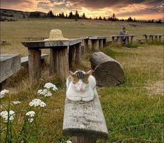 I have lived with many Zen masters... .all of them cats. ~Eckhart Tolle