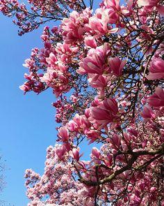 """Jennifer Düing on Instagram: """"Nach oben schauen und hoffen.  ______ #urlaubfürdieseele #urlaubfürdieaugen #spring #springtime #springflowers #springishere #frühling…"""" Plants, Red, Instagram, Flora, Plant, Planting, Rouge"""