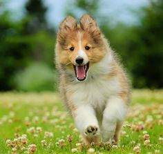 Happy dog by Jane Bjerkli on 500px