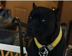 What kind of dog is this? It looks cool Like Animals, Animals And Pets, Hobby Shops Near Me, What Kind Of Dog, Hobbies For Men, Bully Dog, Pit Bull Love, Cane Corso, Looks Cool