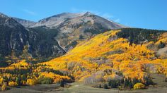 Spectacular fall color just south of Crested Butte on a beautiful morning, September 27, 2014. (Photo submitted by William Helms)