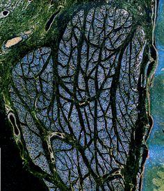 Las fotografías del microscopio extraordinarios - Fotos - The Big Picture - Boston.com