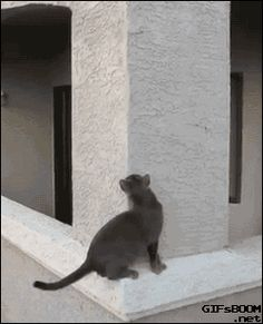 this kitty is a ninja   #crazy #cats more #cute & #funny...