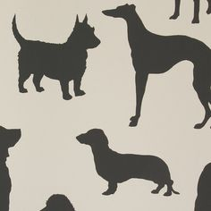 Osborne & Little - Grand Tour Collection - Best In Show Wallpaper - W618103