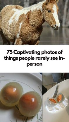 75 Captivating photos of things people rarely see in-person Diy Crafts To Sell, Diy Crafts For Kids, Home Crafts, Sell Diy, Weird Facts, Fun Facts, Hydrangea Care, Usa Tumblr, Good Jokes