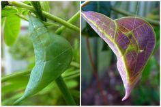 Chrysalis Hunting in the Butterfly Garden. birdsandblooms.com