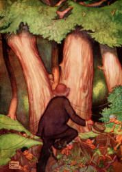 Three Tremendous Yews had sprung up in the Opening - The Password to Fairyland by Elizabeth Southwart, 1920
