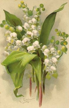 Lily of the valley, Catherine Klein Catherine Klein, Images Vintage, Vintage Diy, Vintage Cards, Vintage Postcards, Vintage Paper, Illustration Blume, Botanical Illustration, Vintage Flowers