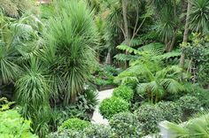 Garden Landscaping with Palmco - tropical garden ideas Ferns Garden, Cottage Garden Plants, Tropical Landscaping, Backyard Landscaping, Tropical Gardens, Landscaping Design, Tropical Plants, Balinese Garden, Sloped Garden