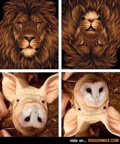 ¿Cuántos animales ves?
