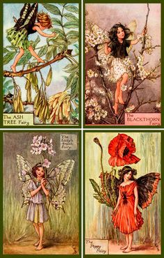 Olde America Antiques   Quilt Blocks   National Parks   Bozeman Montana : Cicely Barker Fairy Sets - Cicely Barker Fairies Set 4-- FC0013/Q The Poppy Fairy FC0014/Q The Lady Smock Fairy FC0015/Q The Blackthorn Fairy FC0016/Q The Ash Tree Fairy