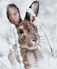 Bunny in snow Animals And Pets, Baby Animals, Funny Animals, Cute Animals, Cute Baby Bunnies, Bunny, Tier Fotos, Jolie Photo, Animal Photography