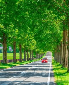Tree Tunnel, May We All, Forest Garden, Fantasy Places, Pathways, Trail, Scenery, Around The Worlds, Country Roads