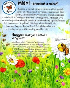 Picasa Webalbumok Insect Crafts, Bugs And Insects, Crafts For Kids, Environment, Album, Teaching, School, Montessori, Science