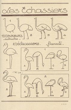 animaux 34 how to draw flamingoshow to draw flamingos Drawing Lessons, Drawing Techniques, Drawing Tips, Drawing Sketches, Art Lessons, Sketching, Contour Drawing, Bird Drawings, Animal Drawings