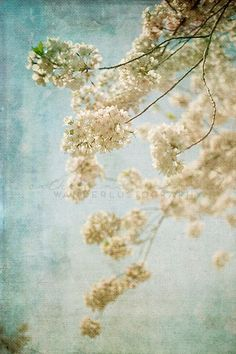 Blessings Photographic Print Spring Shabby - Serene Floral Canvas Wall Decor