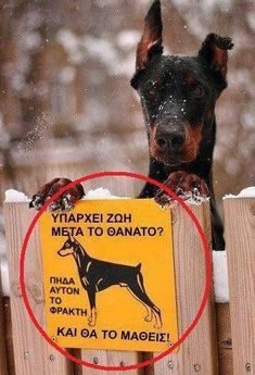 Greek Memes, Funny Greek, Funny Photos, Best Funny Pictures, Funny Texts, Funny Jokes, Big Cats Art, Funny Expressions, Funny Pins