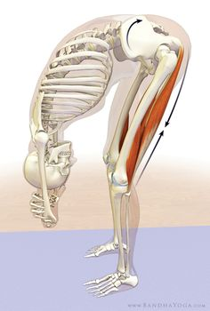 How Tight Hamstrings Affect Your Lumbar Spine. Tight hamstrings cause posterior rotation of pelvis and retroversion of the hip with resultant flexion of the lumbar spine Sport Food, Tight Hamstrings, Tight Hips, Getting A Massage, Chiropractic Care, Massage Therapy, Physical Therapy, Asana, Yoga Meditation