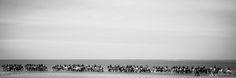 Stroa Noordwelle door Dick van der Veer