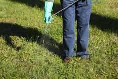 Fall Weed Control Tips for Better Lawns Year-Round Amazing Gardens, Beautiful Gardens, Lawn Turf, Weed Types, Diy Garden Decor, Garden Ideas, Seed Germination, Weed Seeds, Weed Control