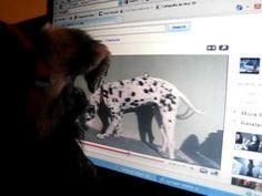 Aldo watching youtube