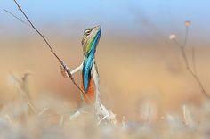 Опубликованы самые смешные фото дикой природы за 2016 год — New News