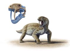 """Tiarajudens by Mauricio Antón. """"adult individuals with full-sized tusks could not possibly open their mouths wide enough to bite with them! So what was the use of their spectacular teeth? Reptiles, Mammals, Prehistoric Wildlife, Prehistoric Creatures, Alien Creatures, Extinct Animals, Large Animals, Animal Drawings, Animal 2"""