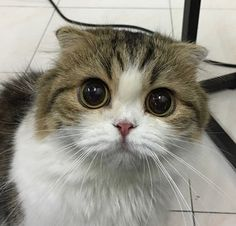 Kepada Pencinta Kucing Setia. Kami telah menyediakan senarai lengkap Cafe Kucing Menarik di Malaysia. Minum Kopi sambil rehat di Studio Kucing terbaik di KL