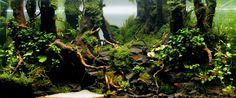 Walk in the Woods by Gauthier FERAMUS from FRANCE Aquarium size: 60 x 30 x 30 cm