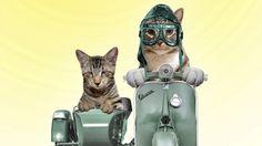 Oskar & Klaus motorcycle cats