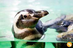 Aquário de São Paulo - Pinguim