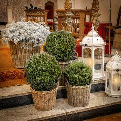 Boj, Paniculata y velas www.mardeflores.com