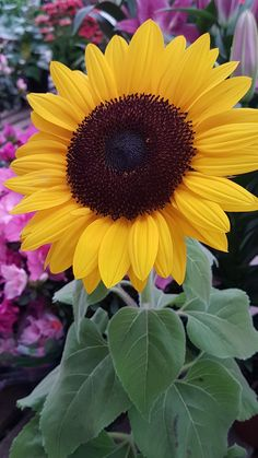 15 Ideas For Yellow Flower Art Sunflower Fields Happy Flowers, Love Flowers, Yellow Flowers, Beautiful Flowers, Sun Flowers, Sunflower Pictures, Sunflower Flower, Sunflower Fields, Sunflowers And Daisies