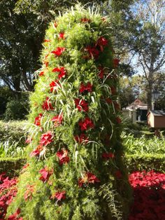 Creative - Asparagus vine, Poinsetta, and Spider plant tree from Disney