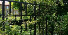 Even though historical throughout strategy, this pergola may be encountering a bit of a contemporary Wall Trellis, Gray Rock, Getaway Cabins, Simple Colors, Grey Stone, Planter Boxes, Climbing, Backyard, Exterior
