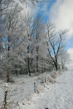 This makes me miss back home.  This is what it looked like on the road I live on in the winter.