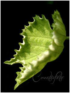 Kristen Olivares-Fine Art Photography-Simple nature