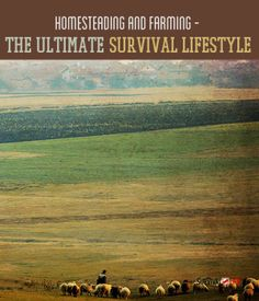 Survivalist should know Homesteading and Farming – The Ultimate Survival Lifestyle