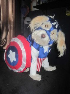 PIC tutorial - Captain America dog costume