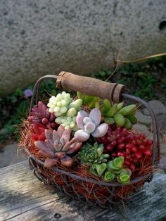 Succulents in a Wire Basket with a Wooden Handle ....