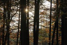 ... und Bäume Trunks, Plants, Resin, Seasons Of The Year, Drift Wood, Tree Trunks, Plant, Planets