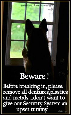 LOL!! Yes, please. If he eats too much, I'll be fine about cleaning up barfed-up burglar bits, but I don't want him getting a tummy trauma from metal parts.