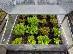 Hydroponic Gardening Tips for cold frame gardening and how to make cold frames and hot beds from The Old Farmer's Almanac. - Tips for cold frame gardening and how to make cold frames and hot beds from The Old Farmer's Almanac. Small Greenhouse, Greenhouse Gardening, Gardening Tips, Organic Gardening, Greenhouse Plans, Growing Lettuce, Hydroponic Farming, Hydroponic Growing, Gardens