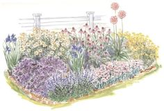 garden plan - A full sun corner in the garden