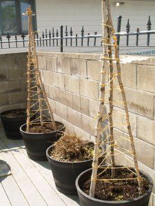 building a cucumber trellis - I can do this with Keelin's morning glory's too.