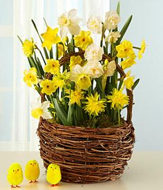 Send our nest basket—planted full of the best Jonquil bulbs available—and give a living gift that will keep giving.