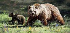 Wildlife Paintings by Dan Rickards 20