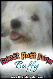 Guest post from my dog Buffy. #dogs #doglovers #dogmom