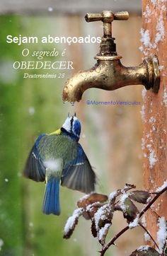 Momento Versículos: O segredo é OBEDECER (Deuteronômio 28)